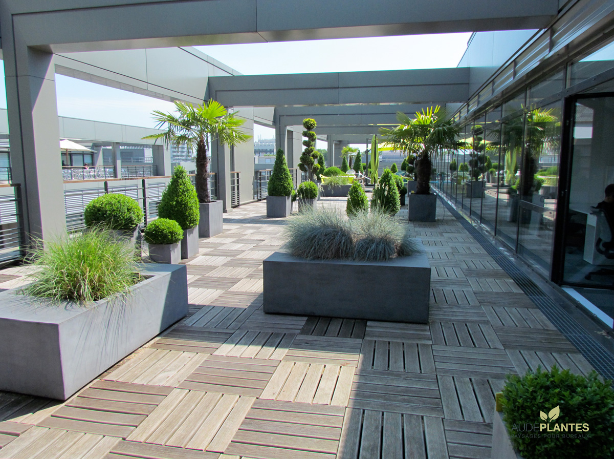 plante pour terrasse fashion designs. Black Bedroom Furniture Sets. Home Design Ideas