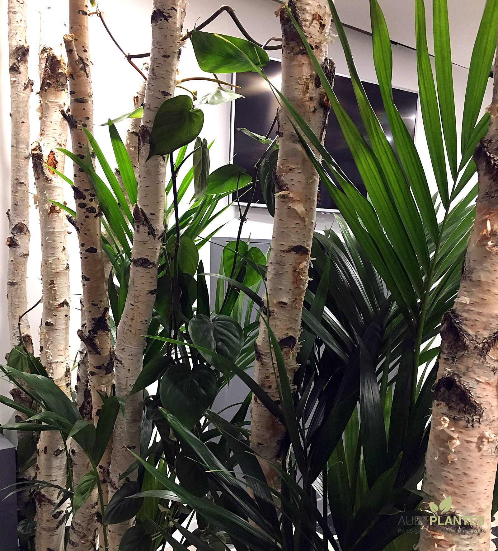 Cloison Plante l'espace d'accueil | aude plantes la nature s'invite au bureau