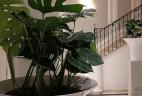 Aude plantes nature au travail