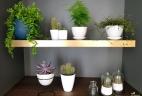 Aude plantes étagere et espace de rangement