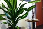 Aménagement et végétalisation d'espace intérieur