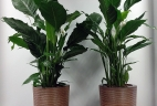 Aude plantes paysagiste d'intérieur pour bureau