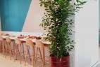 AUDE Plantes espace ouvert de travail