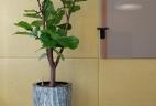 Aude plantes paysages bureaux aménagement
