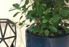 Aude plantes entretien