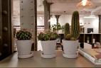 Aude plantes améngement intérieur entretien
