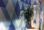 Beaucarnea glossaire aude plantes