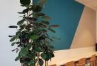 Aude plantes aralia fabiabn glossaire pante intérieur