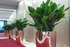 aude plantes paysages pour bureau et espace de travail