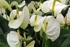 Aude Plantes aménagement plantes