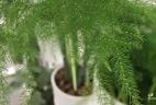 Aude plantes asparagus location service