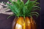 Aude plantes pot plante entretien location