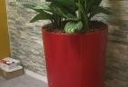 Aglaonema aude plantes paysages pour bureau