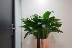 Aude plantes entretien d'espaces