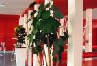 Aude Plantes paysages pour bureaux glossaire plantes intérieur
