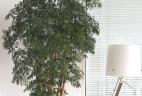 Aude plantes paysages ppour bureaux glossaire