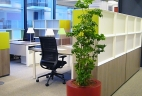 Aude plantes aralia glossaire