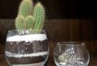 Aude plantes cactus paysage pour bureaux