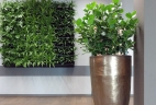 Aude plantes clusia entretien location