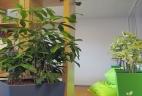 Aude Plantes paysages pour bureaux entretien
