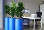 Aude plantes entretien location plantes aménagement coworking
