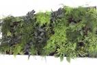 Aude Plantes mur vegetal pour bureaux