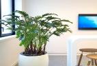 Aude plantes aménagement entretien et services aux entreprises