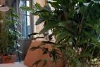 Aude plantes paysage pour bureau plante intérieur espace de travail