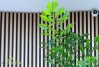 Aude plantes glossaire plante intérieur