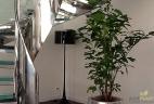 Aude plantes aménagement paysage pour bureau