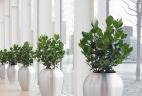 Aude Plantes paysages aménagement pour bureau