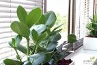 Aude plantes paysages pour bureau aménagement