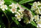 Couleur Pollen herbergement de ruche