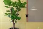 Aude Plantes entretien aménagement