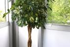 Aude plantes bureaux espace travail botanique aménagement