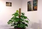 Aude plantes aménage et entretien vos espaces