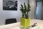 Glossaire plantes intérieur zamioculcas