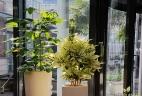 Aude plantes paysages pour bureaux espace d'accueil glossaire
