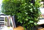 cloison végétale open space