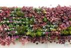 mur végétal fleuri
