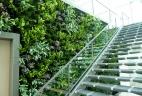 mur végétal intérieur d'accueil