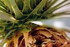 Aude plantes paysages pour bureau glsosaire espace de travail plante intérieur