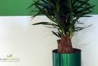 Aude plantes intérieur aménagement et entretien