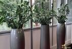 Glossaire aude plantes zamioculcas