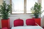 Aude Plantes glossaire plantes intérieur zamioculcas
