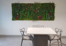 Tableaux et murs végétaux stabilisés