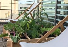 Terrasse et jardin d'entreprise