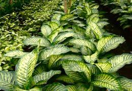 Plante naturelle et plante naturelle stabilisée et plante artificielle