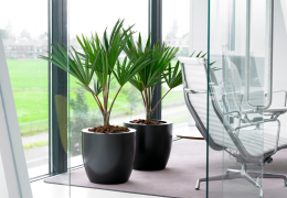 Amenagement Interieur Pour Bureau Aude Plantes La Nature S Invite